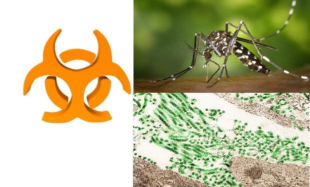 Conheça os vírus mais perigosos e letais para a humanidade