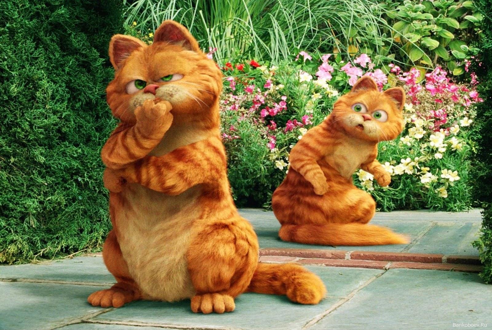Gambar Kata Kata Lucu Orang Wallpaper Lucu Gambar Kucing Garfield