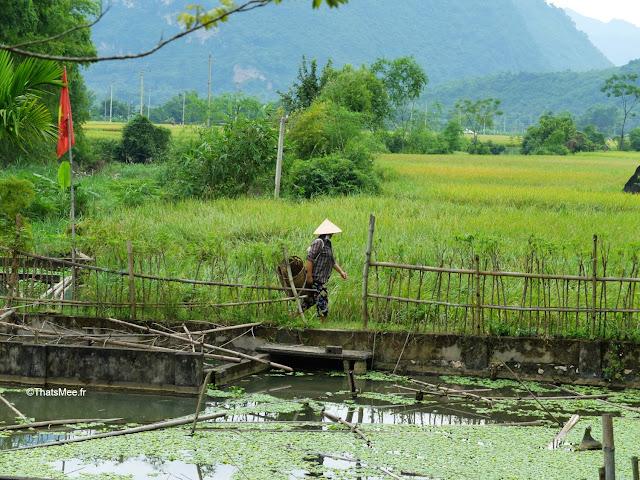 vietnam voyage 15jours mai chau nord montagne riziere