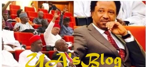 Jumbo Pay: Why Senators Left Shehu Sani Unpunished