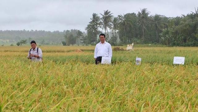 Kata Kementan: Ini Bukti Petani Makin Sejahtera di Era Jokowi-JK