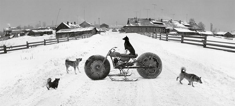 Photographie panoramique de Pentti Sammallahti d'un chien sur une motoneige