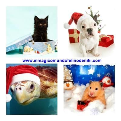 gato-perro-tortuga-hamster-regalo-ideal