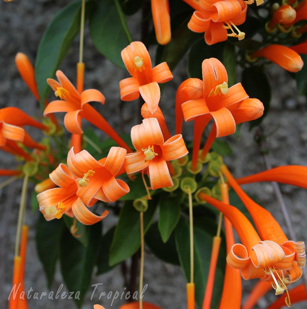 Naturaleza tropical galer a de flores de plantas for Fachadas con plantas trepadoras