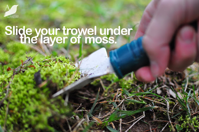How to Grow Moss  #DIY_Garden
