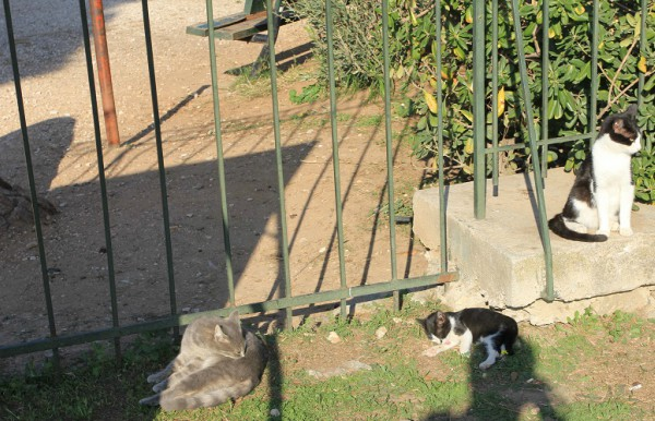 athens feral cats