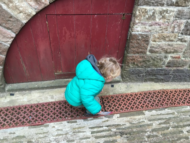 toddler looking in grating