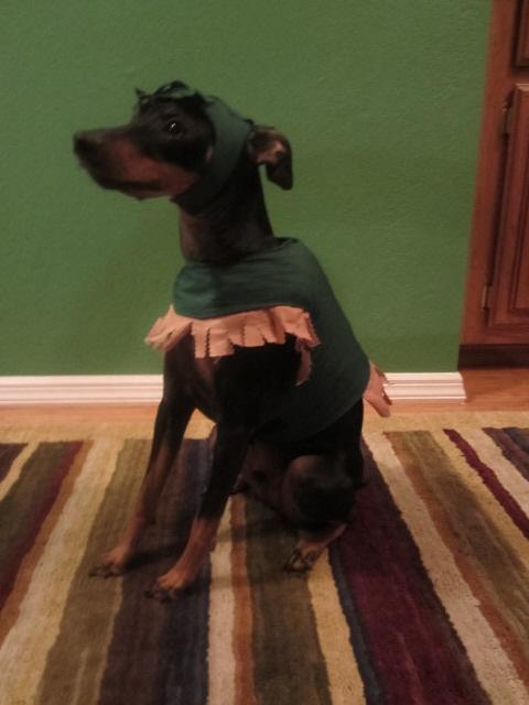 The Hulk Dog Costume | Custom Made Pet Vests