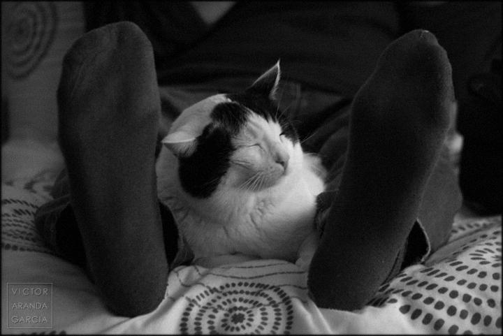 gato, fotografia