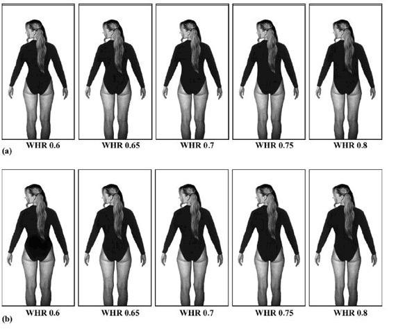 (관상) WHR(Waist-to-hip Ratio, 허리와 엉덩이비율) - 가장 선호하는 기준은 WHR 0.65~0.75평균 0.7 (the ideal WHR