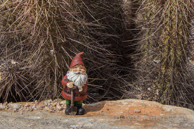 Norton the gnome on the Gateway Loop Trail