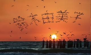初日の出の空に飛ぶ海鳥で名前を表現した名刺