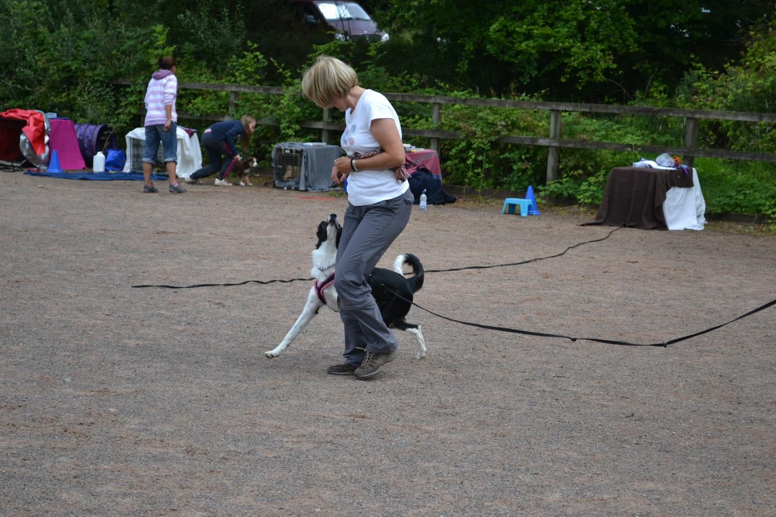 Dave Munnings Dog Training