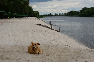 Собакам заборонять гуляти на пляжі