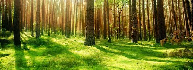 Recursos forestales y bosques