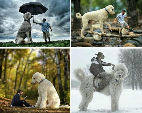 00-Christopher-Cline-Juji-The-Giant-Dog-Photo-Manipulations-www-designstack-co