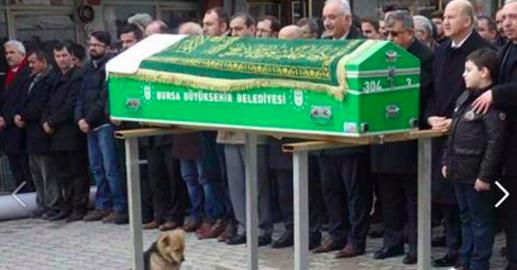 Ce chien est assis avec le regard triste vers le cercueil, ce qui arrive ensuite nous fait pleurerc
