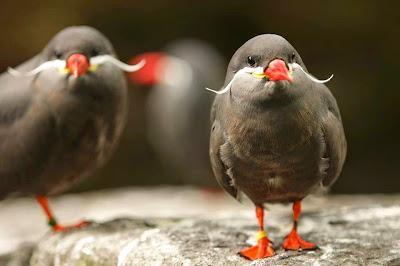 https://bio-orbis.blogspot.com.br/2014/05/aves-de-bigode.html