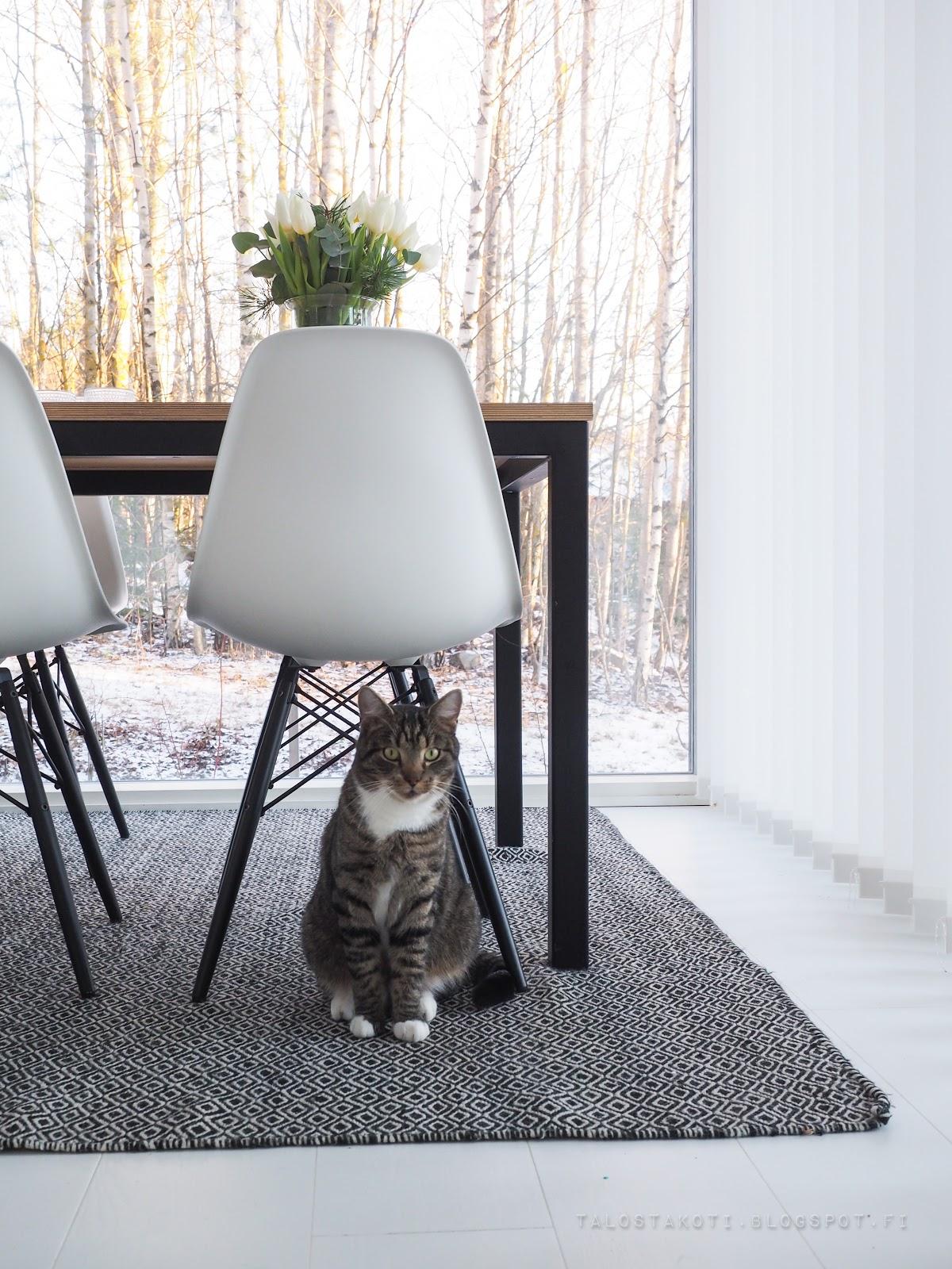 Kissa, keittiö, ruokailutila