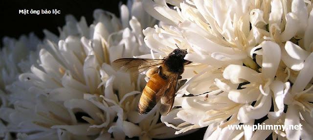 du lich, du lich bao loc, mat ong bao loc