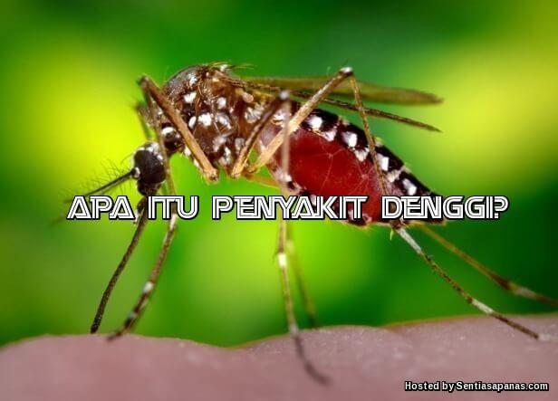 Penyakit Denggi Nyamuk Aedes