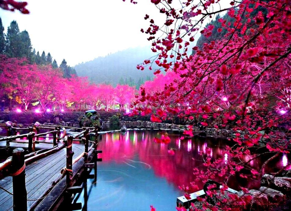 Tulsi Plant Hd Wallpaper: Wallpaper Flower Sakura Hd Photo