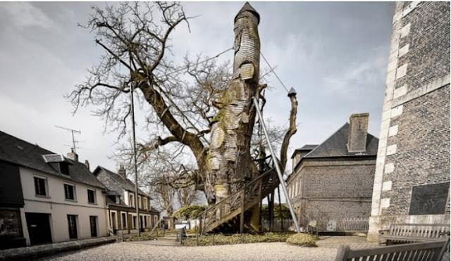 Na França, você pode ver um carvalho que é chamado de árvore da capela