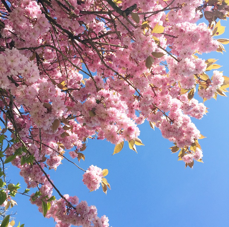 Beautiful spring blossoms and slow days in bristol
