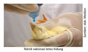teknik vaksinasi tetes hidung