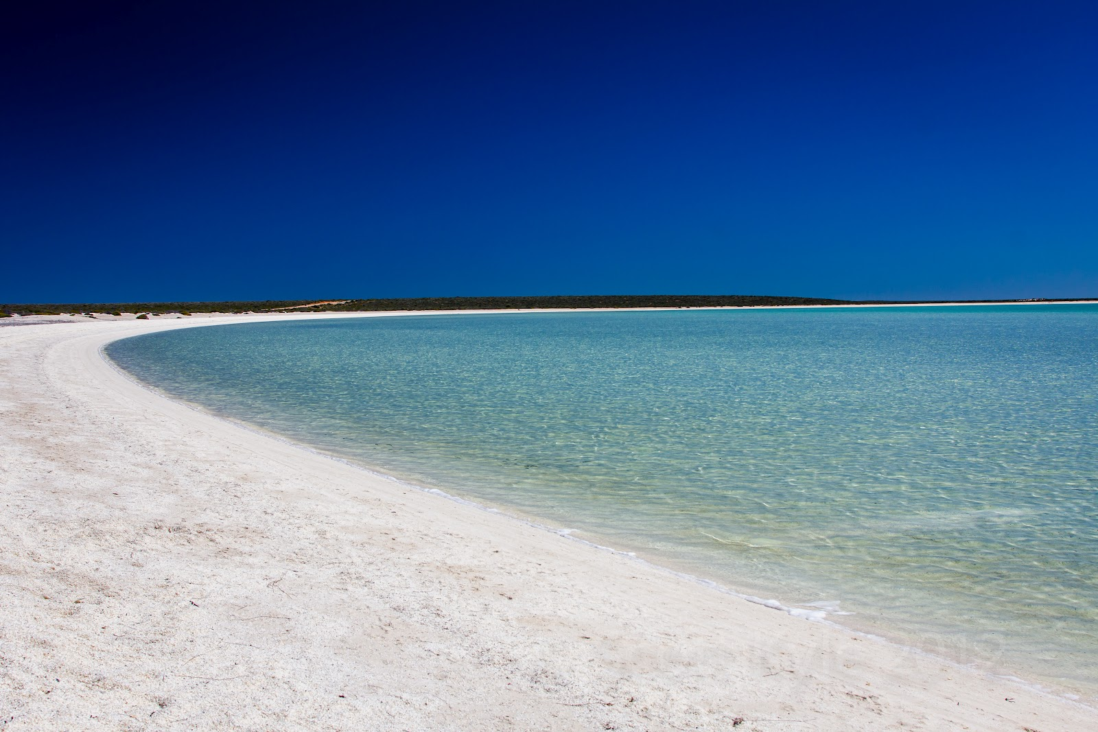 A Trip to Shark Bay & Monkey Mia in Western Australia