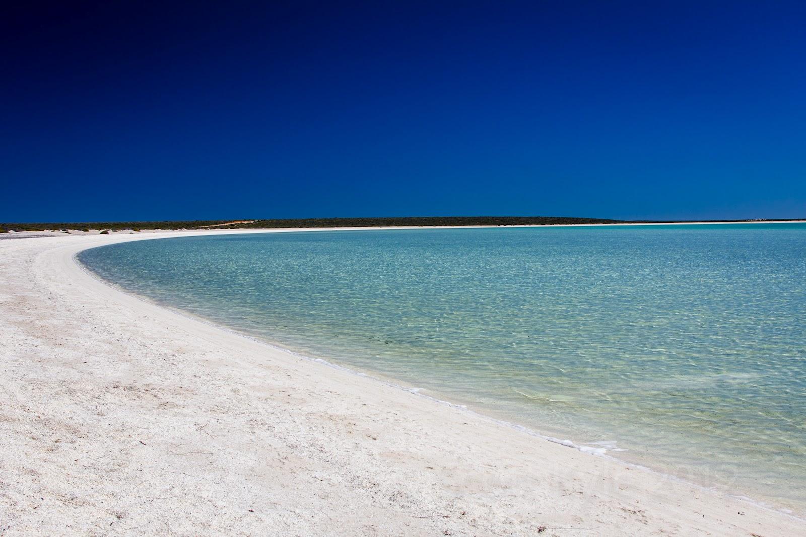 A Trip to Shark Bay & Monkey Mia in Western Australia