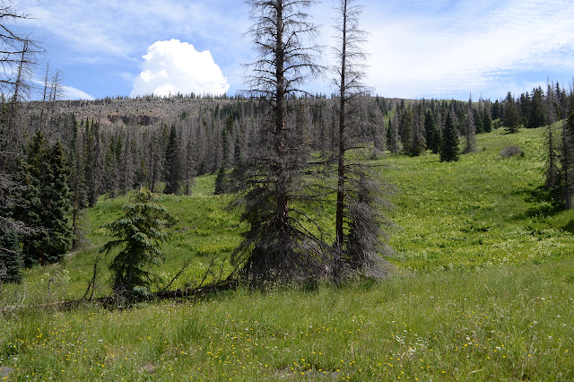 trees and meadow and cliff