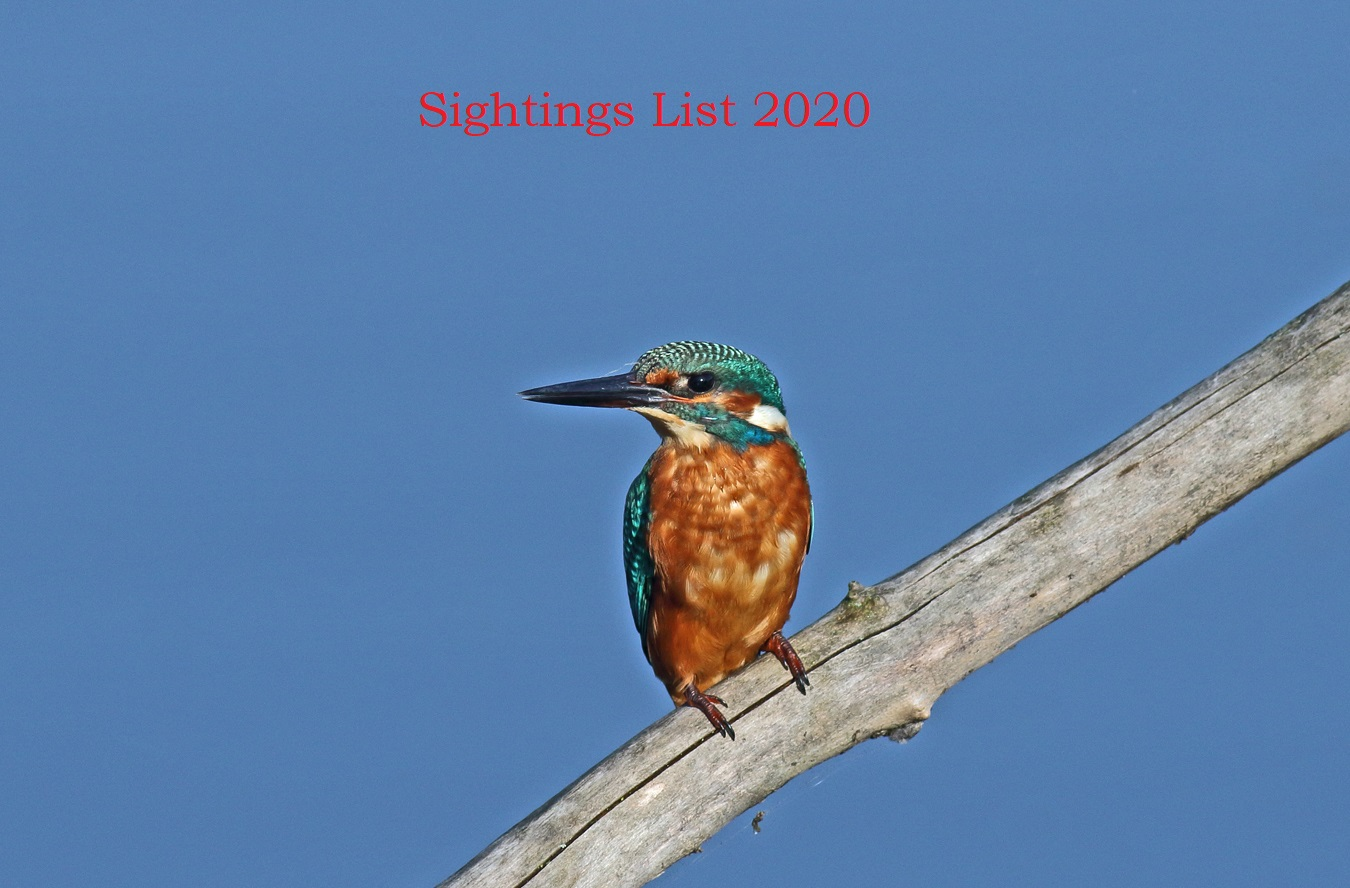Stour Valley Sightings 2020