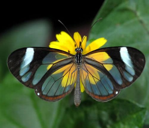10 Most Beautifull Transparent Creatures
