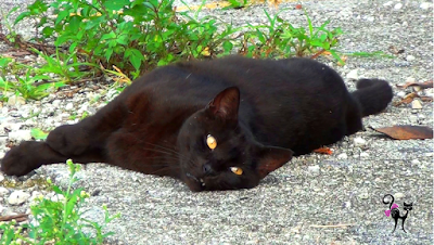 community cats black cat hurricane preparedness