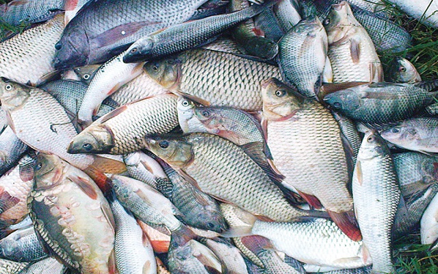 Ghana to import 10,000 tons of fish feed in 2017
