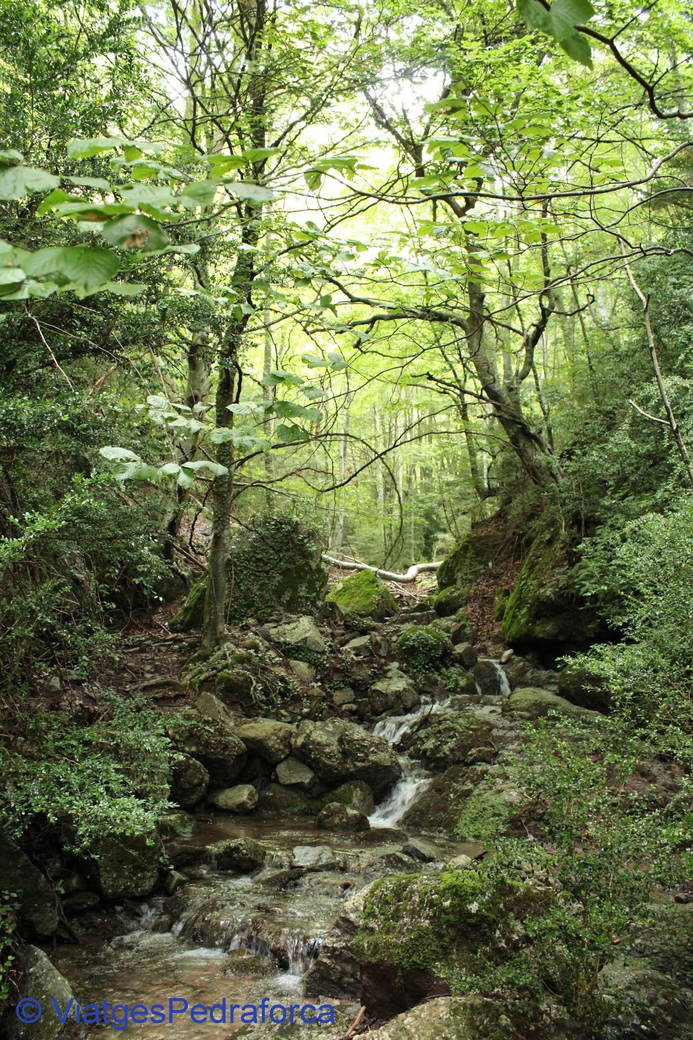 Parc natural del Cadí-Moixeró, Alt Berguedà, Bagà, fagedes, colors de tardor, senderisme per Catalunya