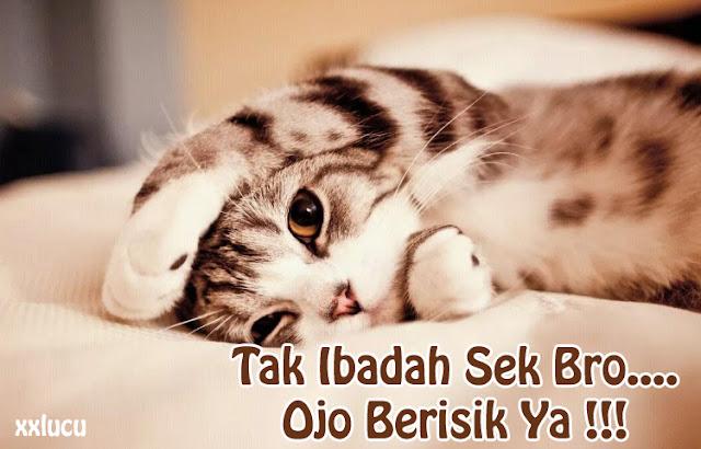 gambar kucing mau tidur lucu