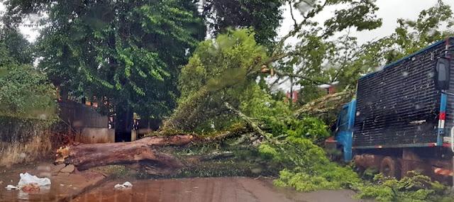 Vento forte derruba árvore no centro da cidade de Iretama