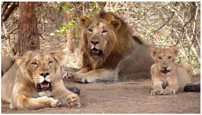 Image result for Sajjangarh Biological Park udaipur
