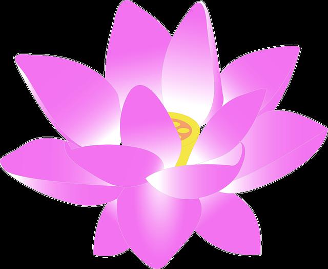 Flor De Lótus Em Png