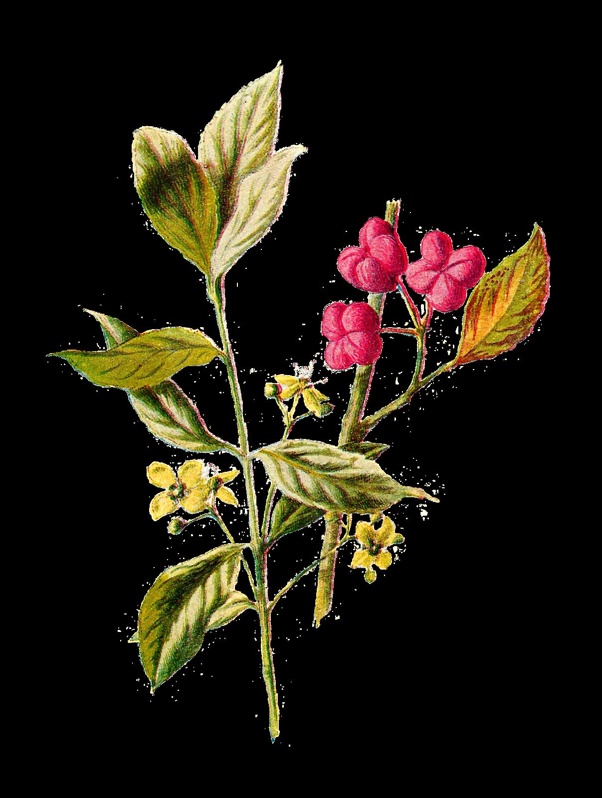 Antique Images: Digital Flower Clip Art Wildflower ...