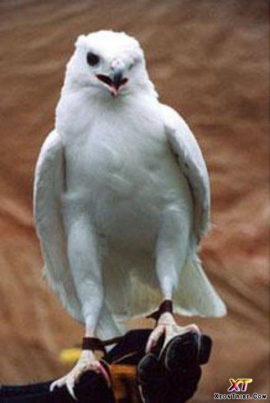 Eagle | A-Z List of 125 Rare Albino Animals [Pics]