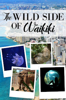 The Wild Side of Waikiki - The Best Zoos Aquariums and Animal Attractions in Hawaii - Family Friend Activities Waikiki Honolulu