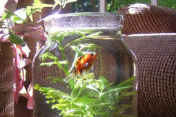 Insiden Dua Ikan Kecil