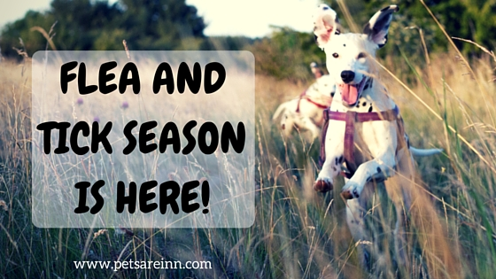 Flea and Tick Season