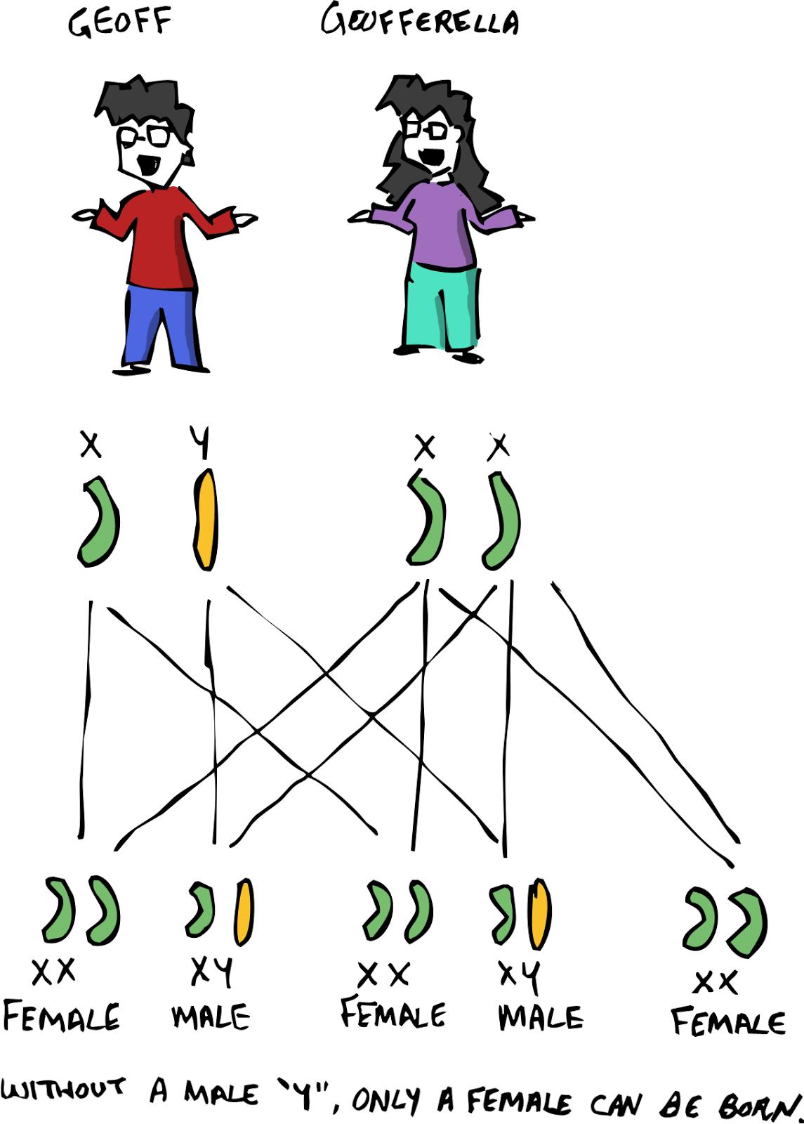 Komodo Dragon Food Chain Diagram Image collections ...