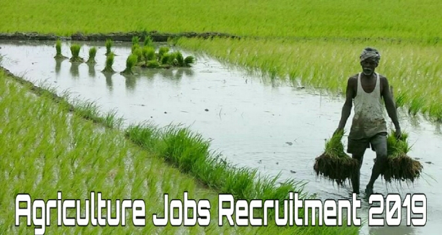 Agriculture Jobs Recruitment 2019,for 186 jobs, salary up to Rs 53,000