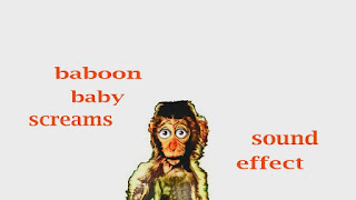 learn baboon sounds