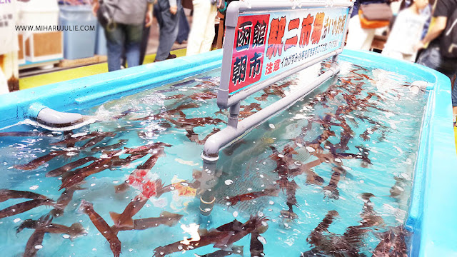 Asaichi Morning Market Hakodate Hokkaido
